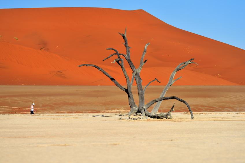 Désert du Namib et ses dunes rouges, Deadvlei, Sossusvlei, en Namibie