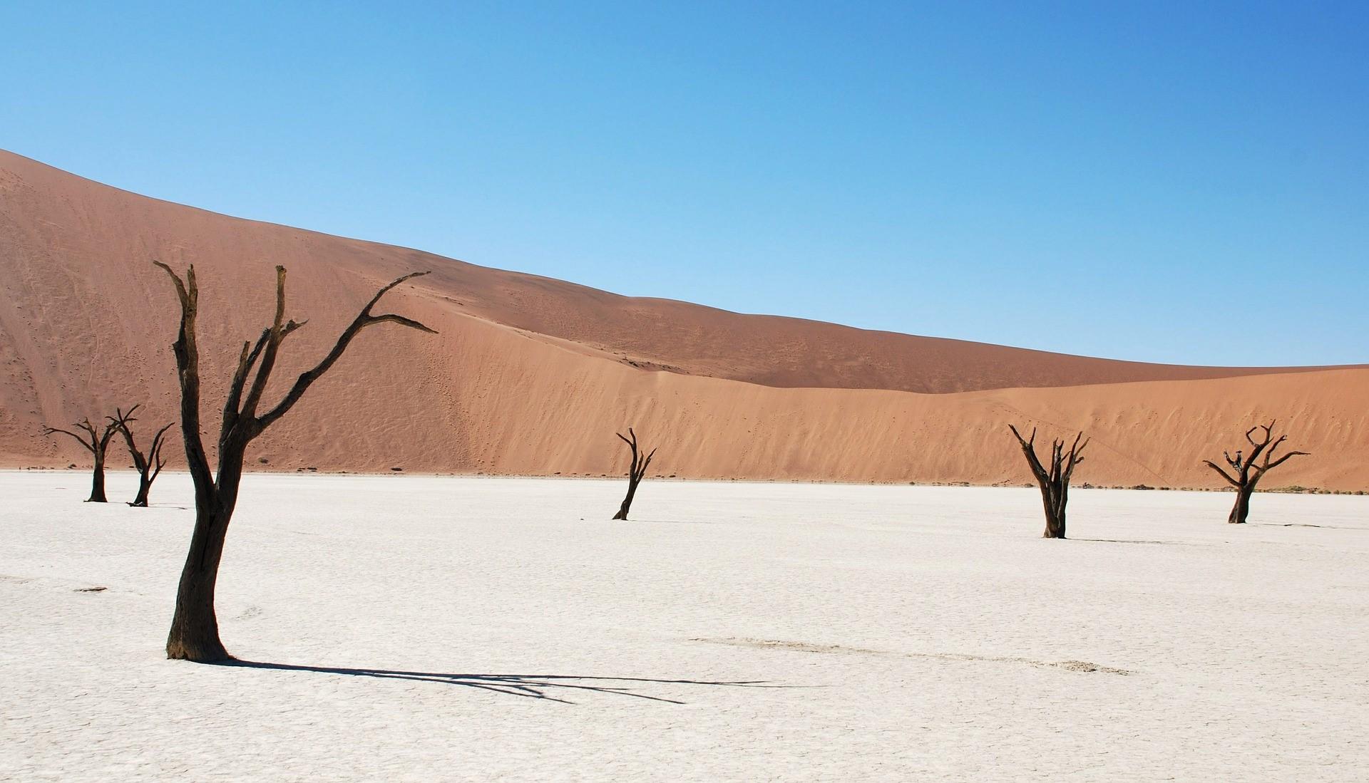 Dead Vlei, cuvette d'argile blanche près de Sossusvlei, dans le désert du Namib, en Namibie