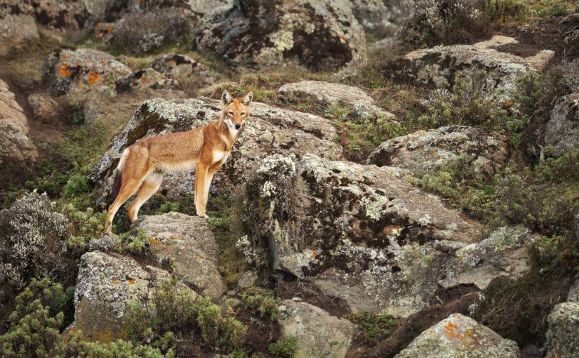 Trek dans le parc Simien en Ethiopie : notre expérience