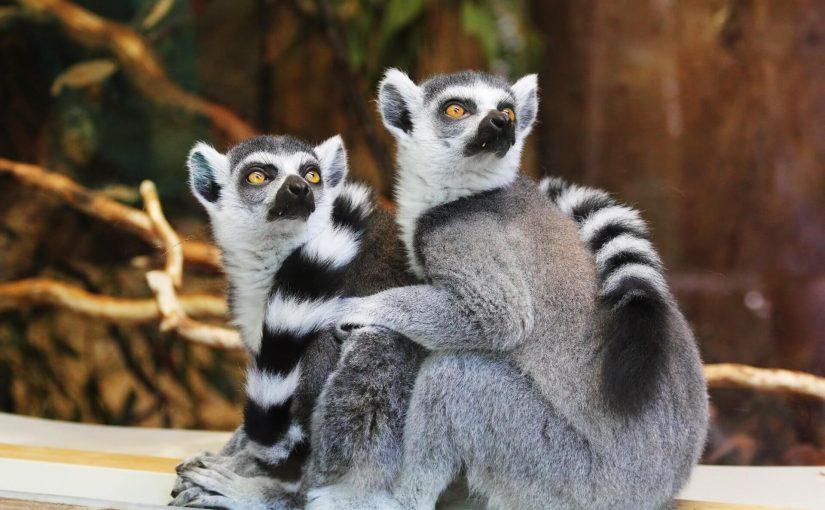 Madagascar : 90% d'animaux endémiques à découvrir